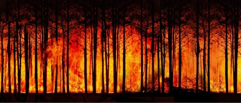 global warming forest fire