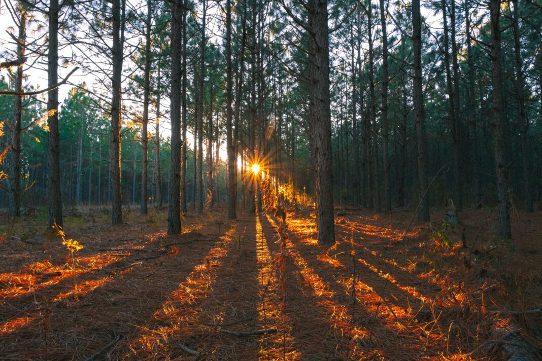 Carbon Credit Opportunities